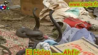 preview picture of video 'el halqa ahfir'