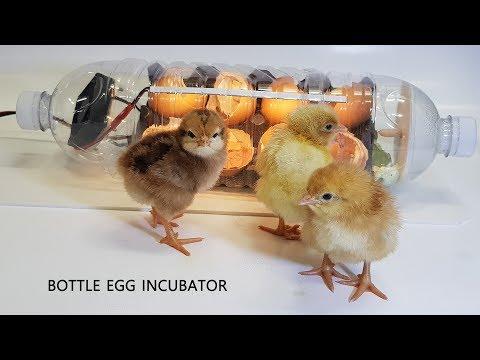 Cách làm máy ấp trứng bằng chai nhựa