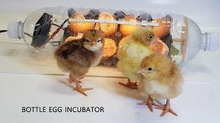Water bottle Egg incubator #2  (페트병으로 부화기 만들기)