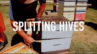 Splitting Hives