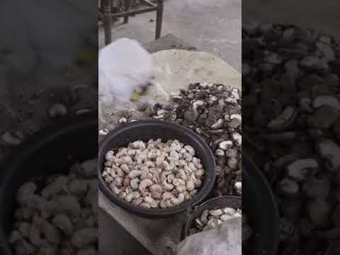 This is Why Cashew Nuts are Expensive