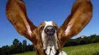 vERY fUNNY dOGS 6