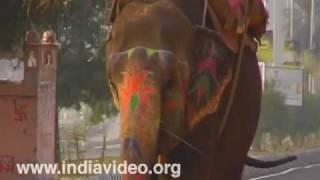 Elephant safari, Amber Fort, Jaipur