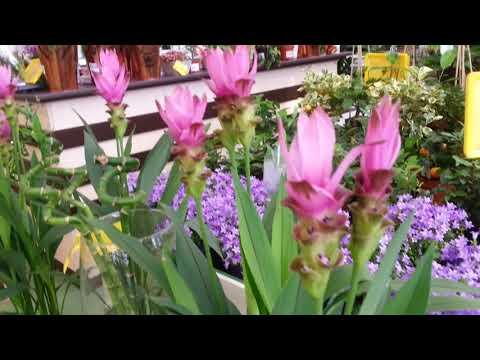 Домашние комнатные растения.Большой выбор цветов.🌻🌼🌻