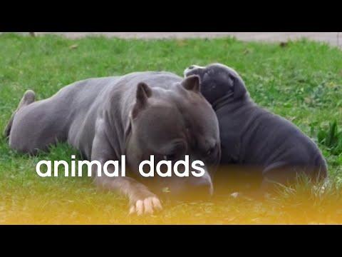 רגעים מתוקים של בעלי חיים שהם הורים
