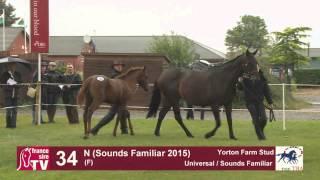 Universal x Sounds Familiar 2016 at TBA Stars of Tomorrow Foal Show