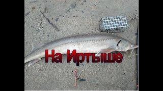 Отчет о рыбалки в омске