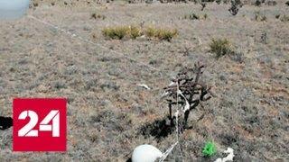 Американский пенсионер совершил самоубийство по сценарию сериала - Россия 24