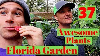 30+ Amazing Plants for your Florida Garden!