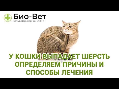 У кошки выпадает шерсть определяем причины и способы лечения