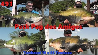 Tambaqui 10 x 3 Tambacu - Fishingtur na TV 491