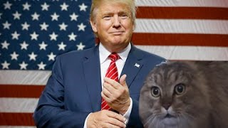 Nono cat Reacts To: Donald Trump!!!!