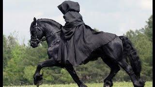 Cavalos Friesian