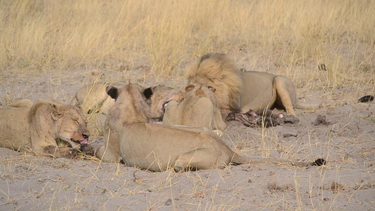 Shipungo Safari & Tours