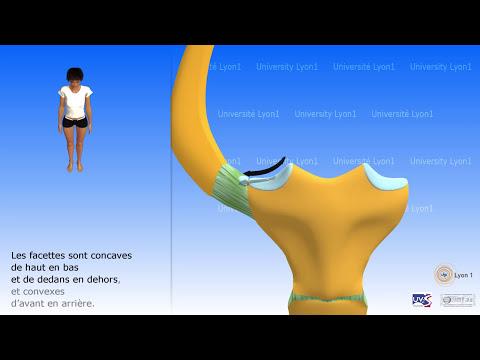 5 exercices pour les muscles du diaphragme de la bassine