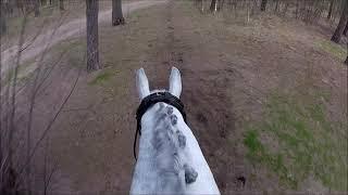 24-3-2019 SGW Alphen-Chaam Elise Talboom met Equarov B-Paarden