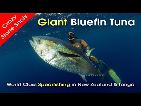 Spearfishing New Zealand Bluefin Tuna & Tonga with MJK