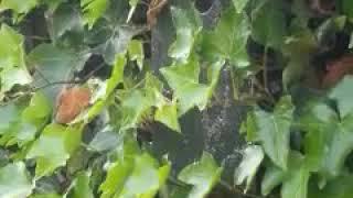 Jonge Koolmezen Vliegen Uit