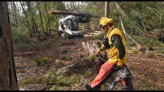 Falling Waters State Park: Post Hurricane Michael