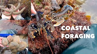 FORAGING LOBSTERS , Big Abalone , Giant Starfish , The Day Of Lobsters an Ormers