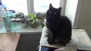 Кошка просит, чтоб её погладили