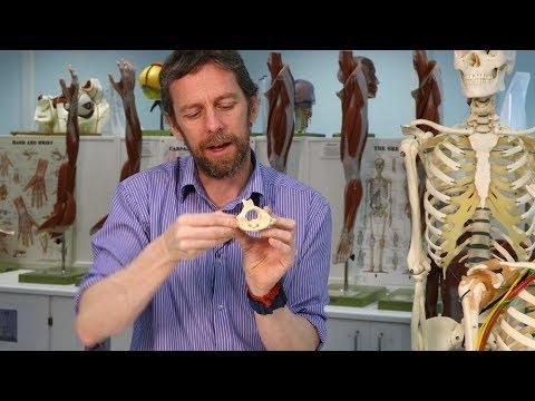 Medicamente care diminuează tensiunea musculară pentru osteochondroza cervicală