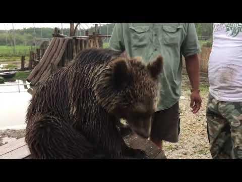 Lujzi ma John tól a krik indián barátunktól kapott egy medve dalt ❤️ #x1f64f;