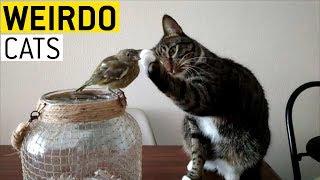 animale faze pisici comice