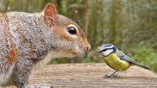 Cat TV - Bird and Squirrel Fun