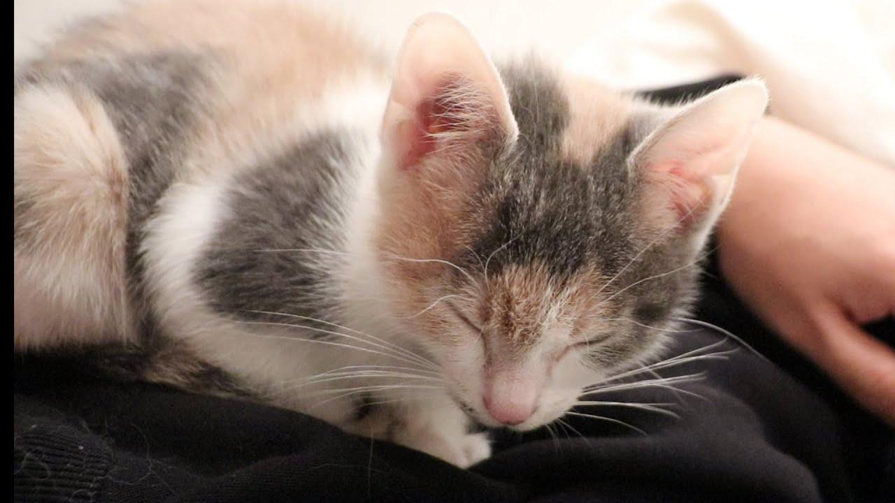 保護した子猫が一緒の布団で初めて添い寝してくれました...!