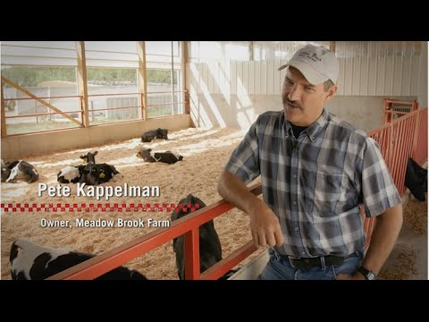 Video Calf management at Meadow Brook Dairy Farms