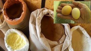 Куры несушки Мало яиц что делать