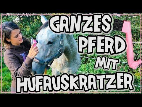 GANZES Pferd mit HUFAUSKRATZER putzen