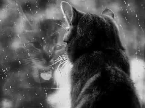 Валентина Толкунова - Девочка и дождь