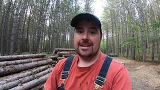Lumber Damaged by Powderpost Beetle