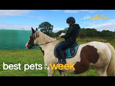 My Trusty Horse | Best Pets of the Week