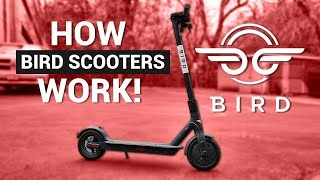 BIRD Electric SCOOTERS! / How They Work!