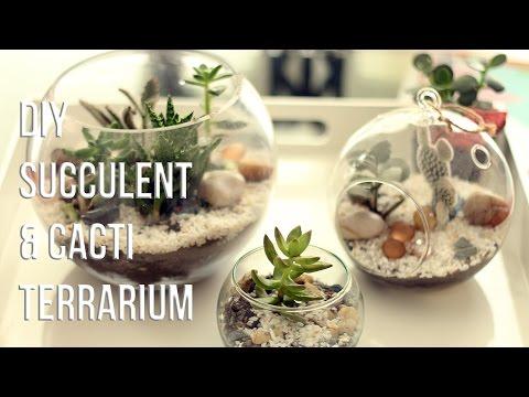 Как да си направим терариум с кактуси