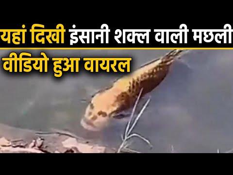 China में दिखी Human Face वाली Fish, Video हुआ Viral । वनइंडिया हिंदी
