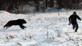 9 Real Bear Attacks on Human Caught on camera