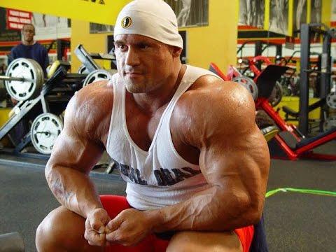 Le membre inférieur lanatomie du muscle