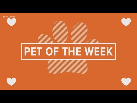 Pet of the Week: Mikey
