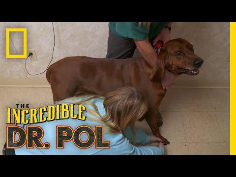 A Dog With a Broken Toenail | The Incredible Dr. Pol