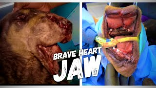 Rescue Dog With Shattered Jaw And Blown Off Nose - HeartWarming Transformation