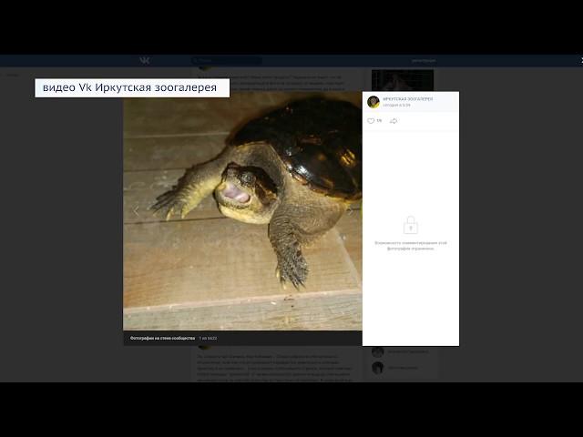 Отдам черепаху за долги