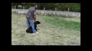 preview picture of video 'Mordant - Journée du chien du Moulin'