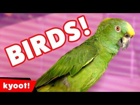 Diviértete Con Las Aves Más Traviesas De Internet