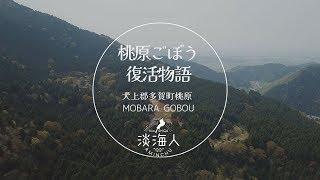 【知られざる滋賀】桃原ごぼう復活物語
