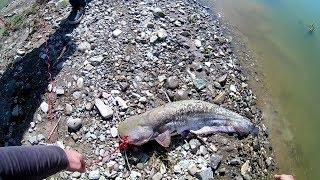 Рыбалка в щелковском водохранилище на сома