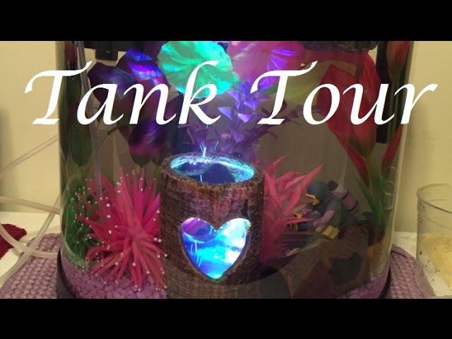 Female Betta Tank Tour! | Trinity's 'Naturally Feminine' Tank
